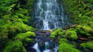 6929042-rainforest-waterfall