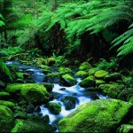 forest great-otway-national-park-01_fs