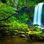 rainforest NJy35jcCe2fKb3D9PDS8RLAC